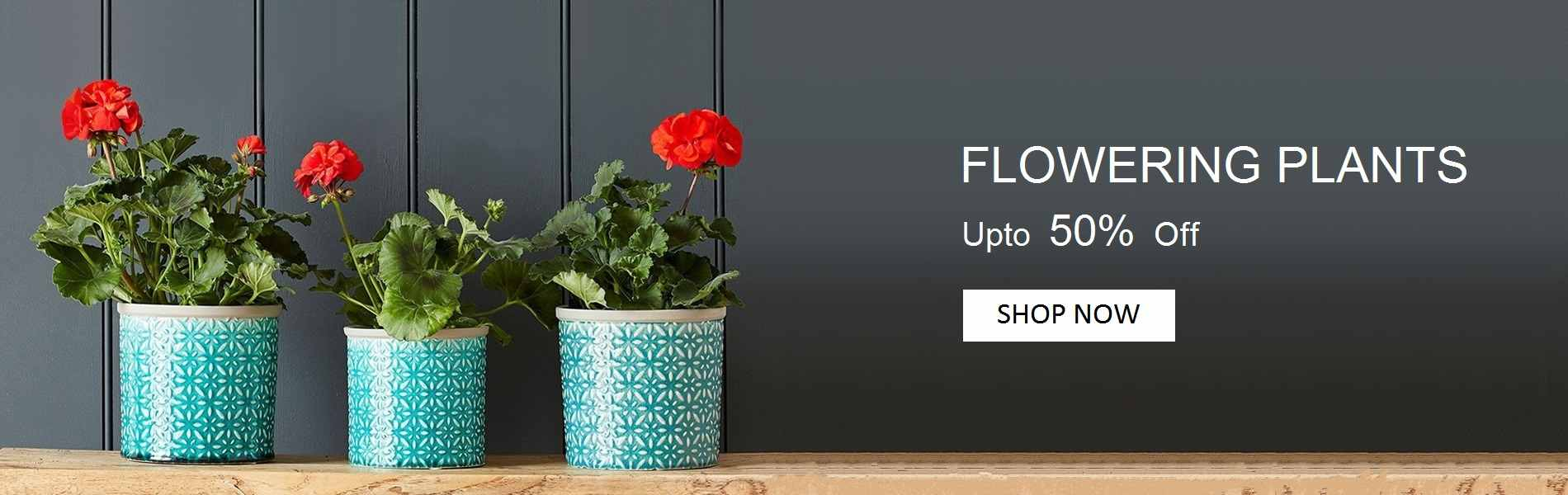 Yoidentity Flower Plants Online