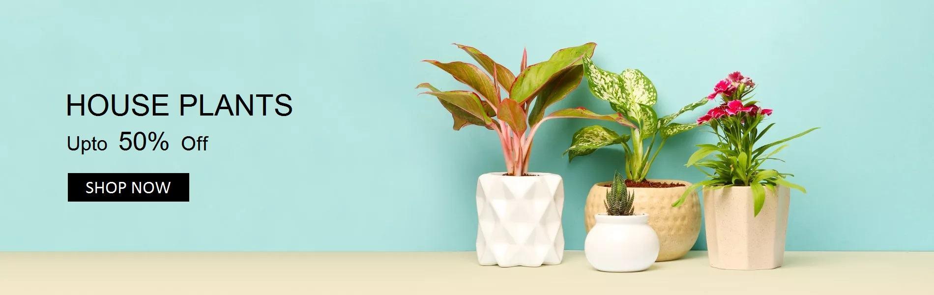 Yoidentity House Plants Online