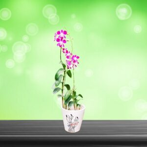 Yoidentity Orchid Flower Plant with Ceramic Pot Gift