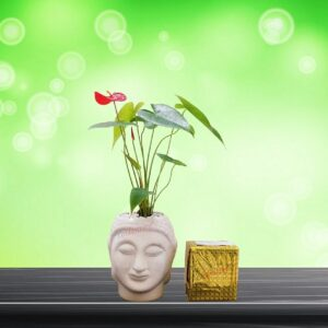Yoidentity Anthurium Plant in a Buddha Face Ceramic Planter Gift